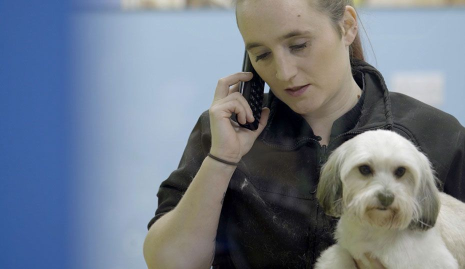 Working In The Groom Room Pets At Home Jobs Careers